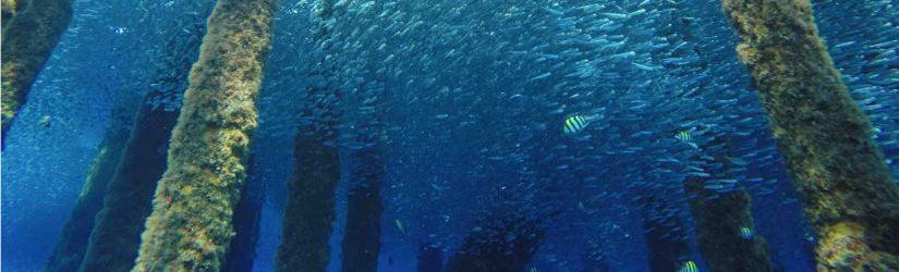 Subsea-ROV